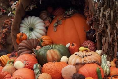 Pumpkins at Dollywood