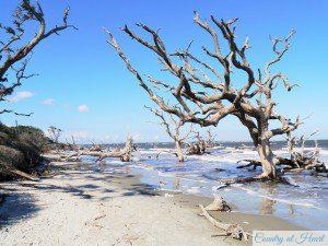 Driftwood Beach nach Links