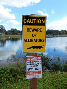 Beware of the Alligator