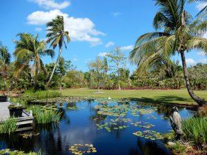 Pond at Naples Botanical Garden