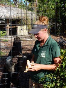 Anteater and Caretaker Zoo