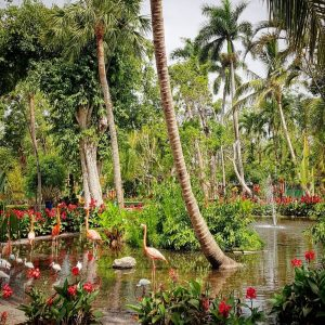 Flamingos at Everglades Wonder Gardens, Bonita Springs