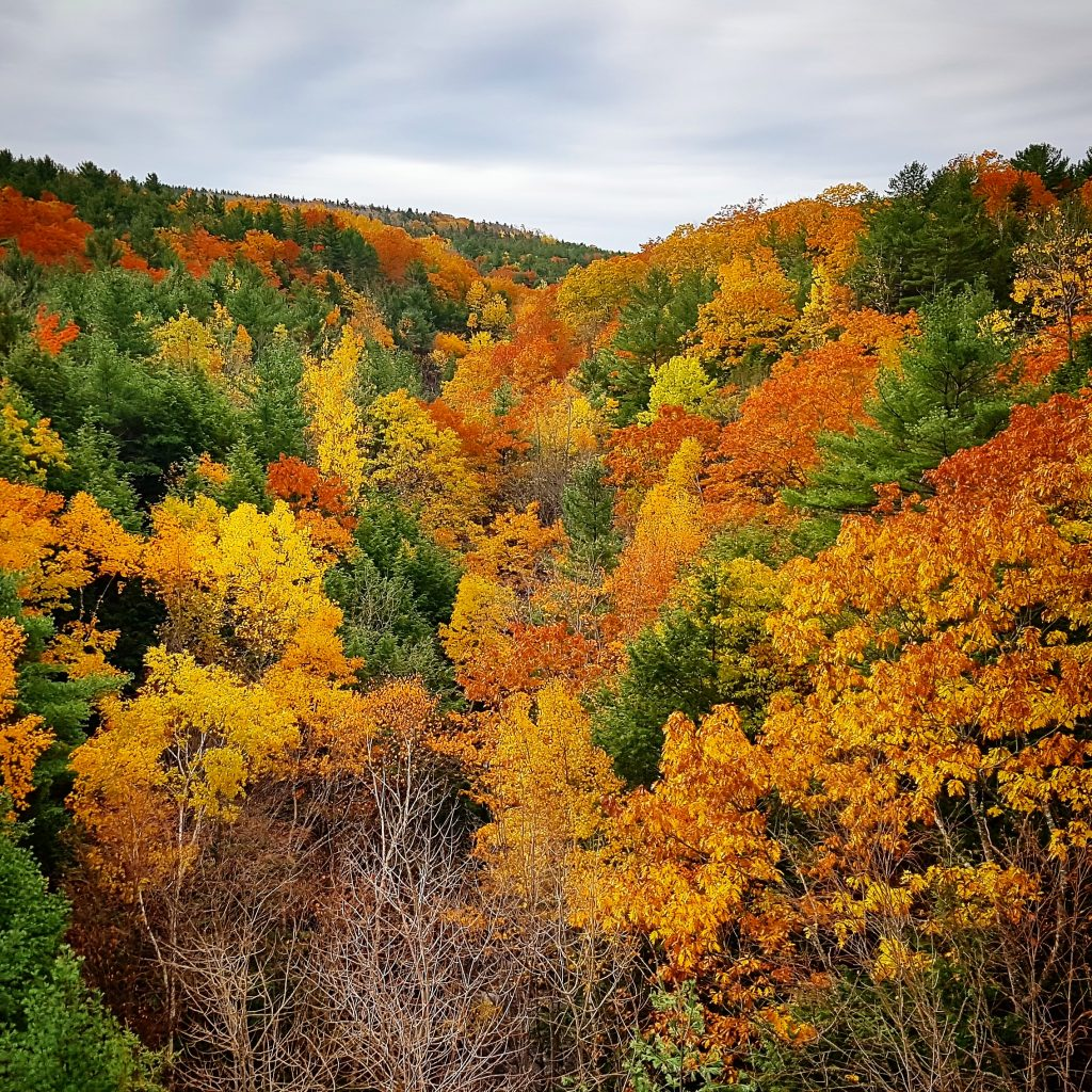 Acadia Nationalpark in October