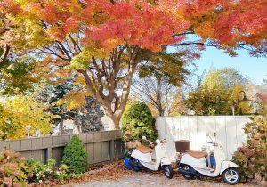 Fall Colors in Newport, Rhode Island